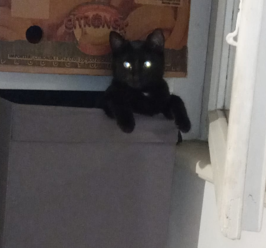Zvědavá Blackie v boxu