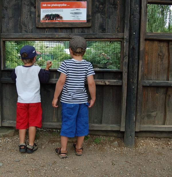 Další den jsme si dali od vody pohov a navštívili plzeňskou zoo. Zde mi Vítek připravil pěkně horké chvilky, když se ztratil. Měl čekat před WC, ale nějak zazmatkoval a odešel. Nakonec byl po nekonečných minutách nalezen u medvědů. Byl z toho dost vyplesklej, já ostatně taky. No, hlavně, že to dobře dopadlo...
